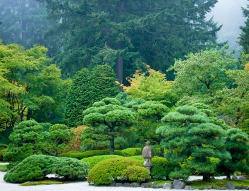 Japanese Garden Closes For Deep Cleaning, Re-opens