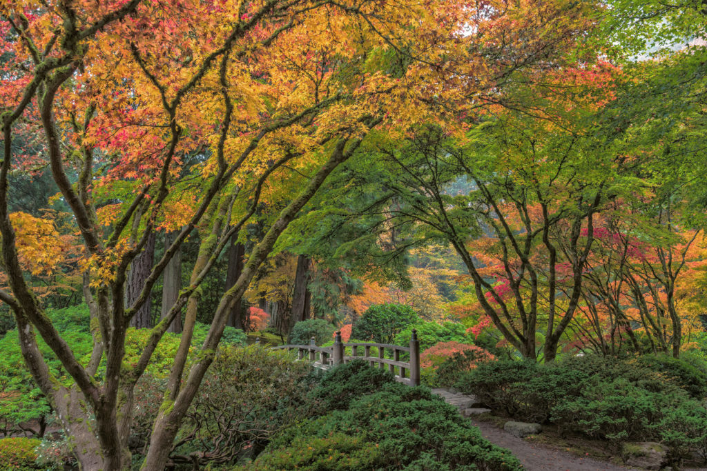 Looking For Autumn Foliage in Oregon? Try the Japanese Garden.